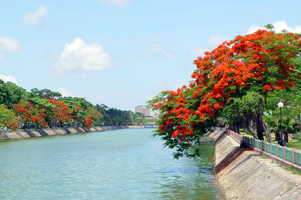 Hải Phòng rực sắc hoa phượng đỏ