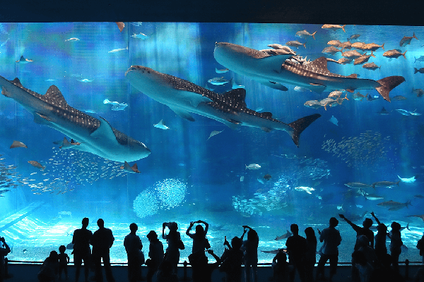 Thủy cung Churaumi Okinawa